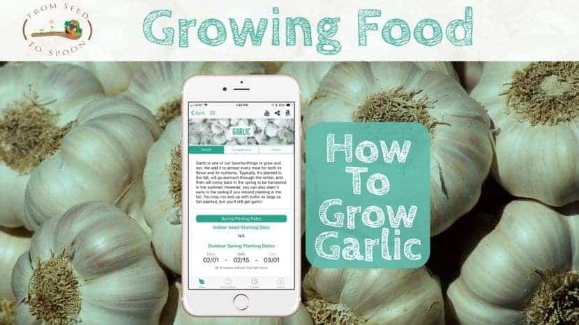 Garlic blog post
