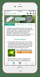 whiteflies
