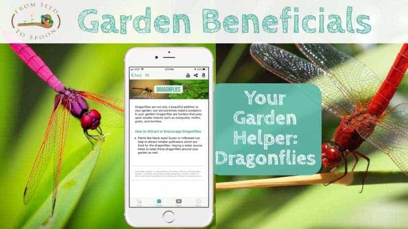 Dragonflies blog post