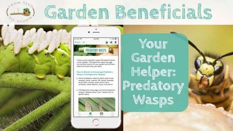 Predatory Wasps blog post