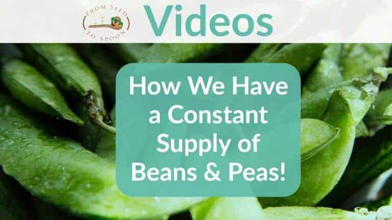 How We Have a Constant Supply of Beans!