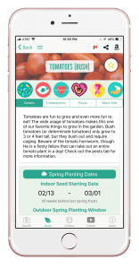 tomatoesbush (1)
