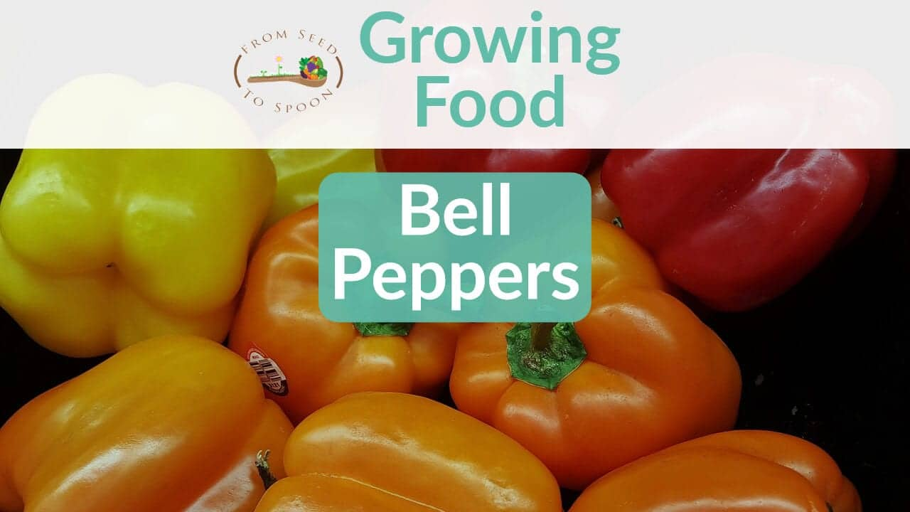 Bell Peppers blog post