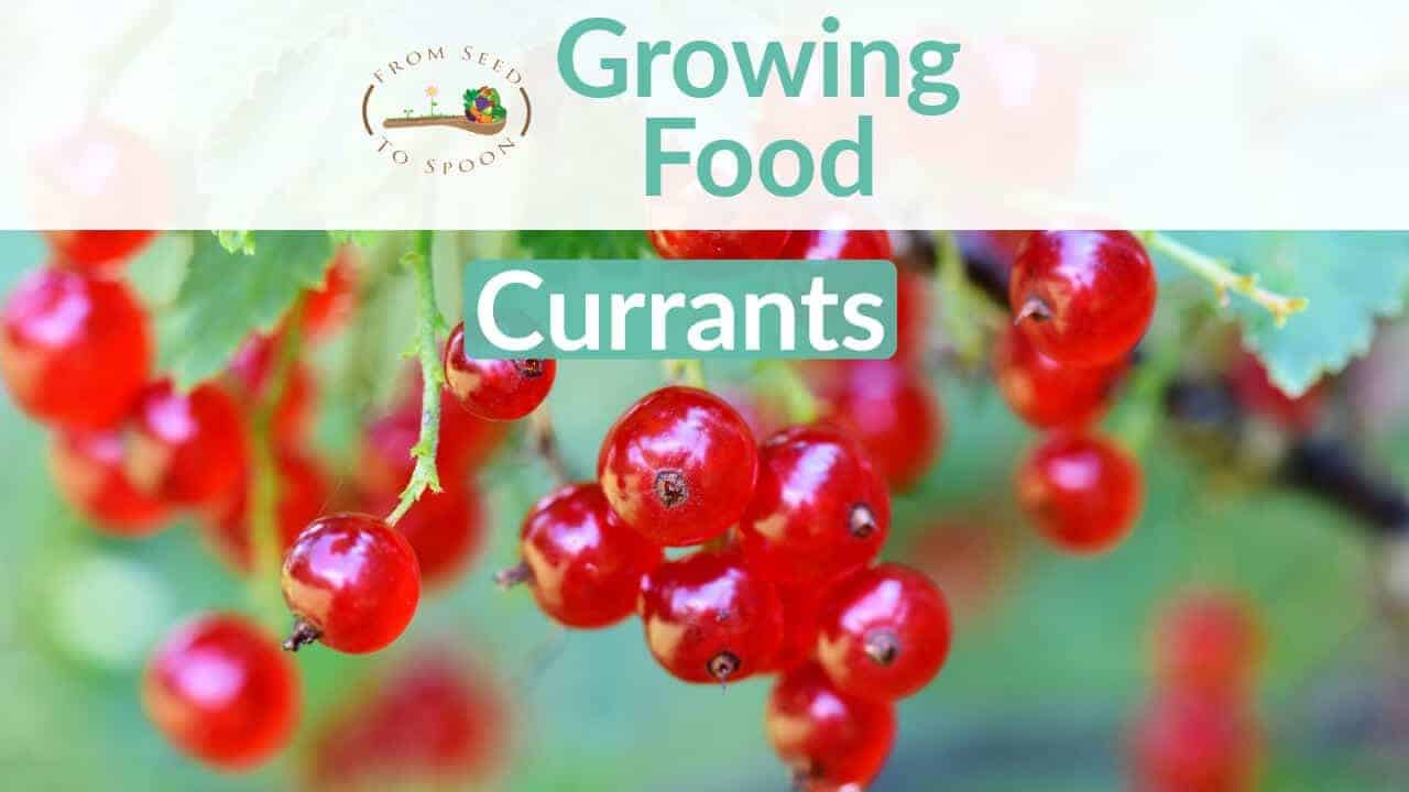 Currants blog post