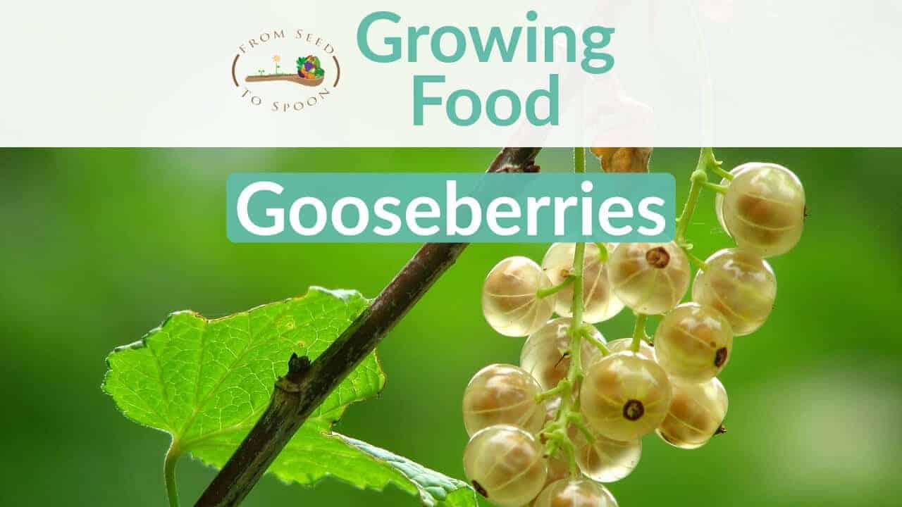 Gooseberries blog post