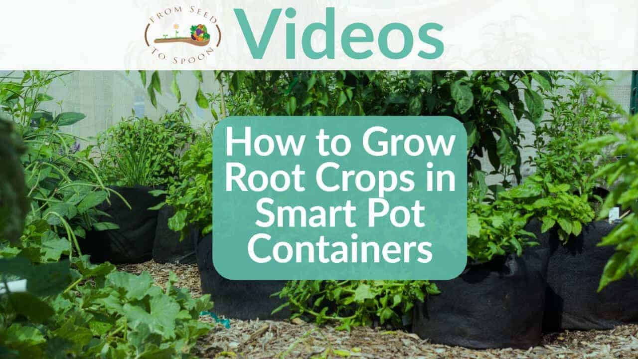 How to Grow Root Crops in Smart Pot Containers