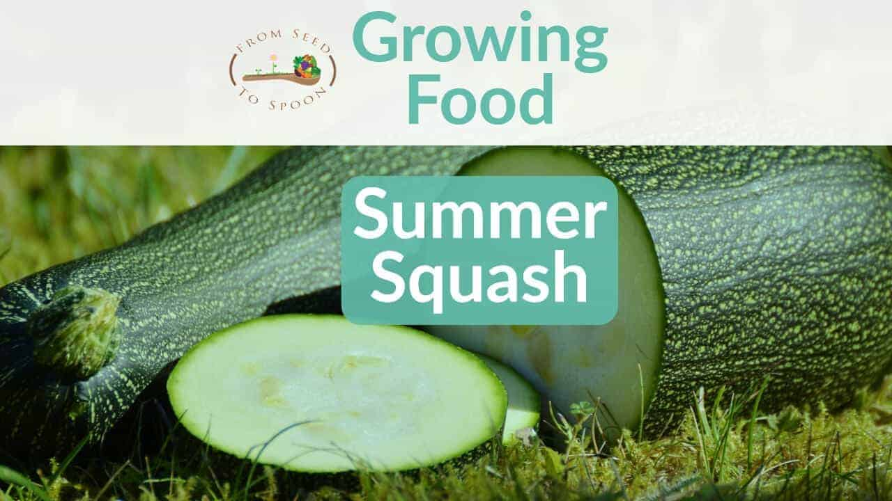 Summer Squash blog post
