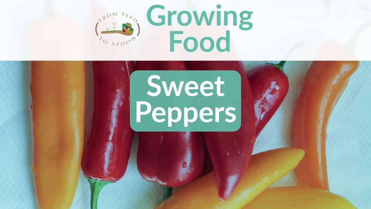Sweet Peppers blog post