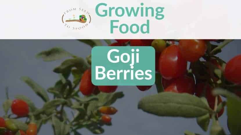 Goji Berries blog post