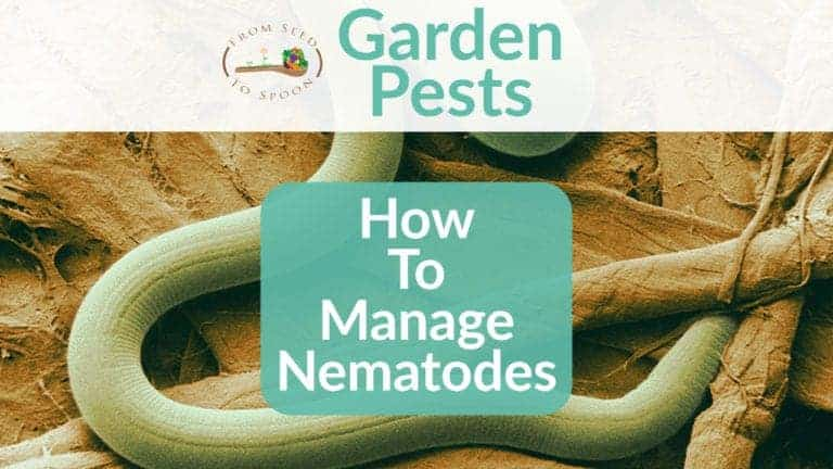 Nematodes blog post