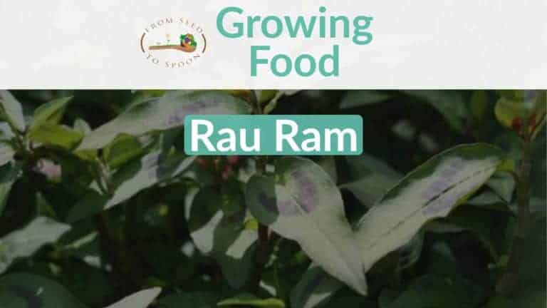 Rau Ram blog post
