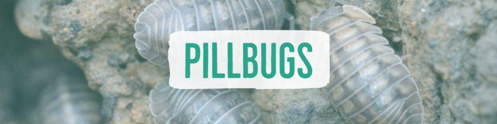 pillbugs-header2
