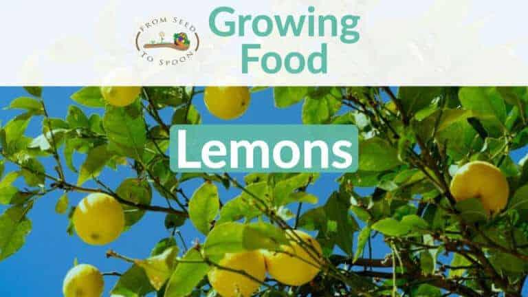 Lemons blog post