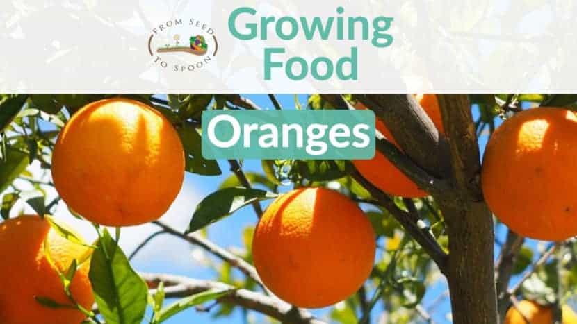 Oranges blog post