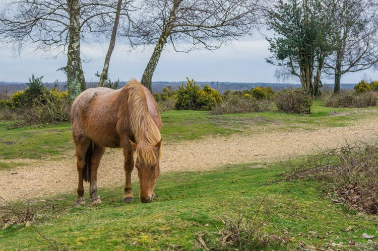 Beautiful english countryside getaways in the new forest south england picture of a horse roaming wild