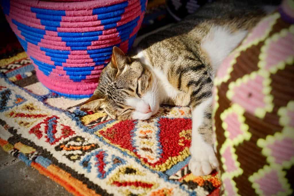 cat asleep between rolls of carpet