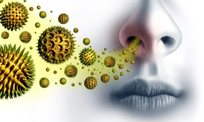 Top Essential Oils for Allergies: How to Use Essential Oils for Sinus Relief