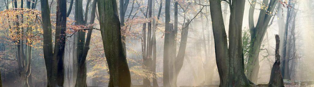 Epping Forest in the autumn, Essex, England, UK