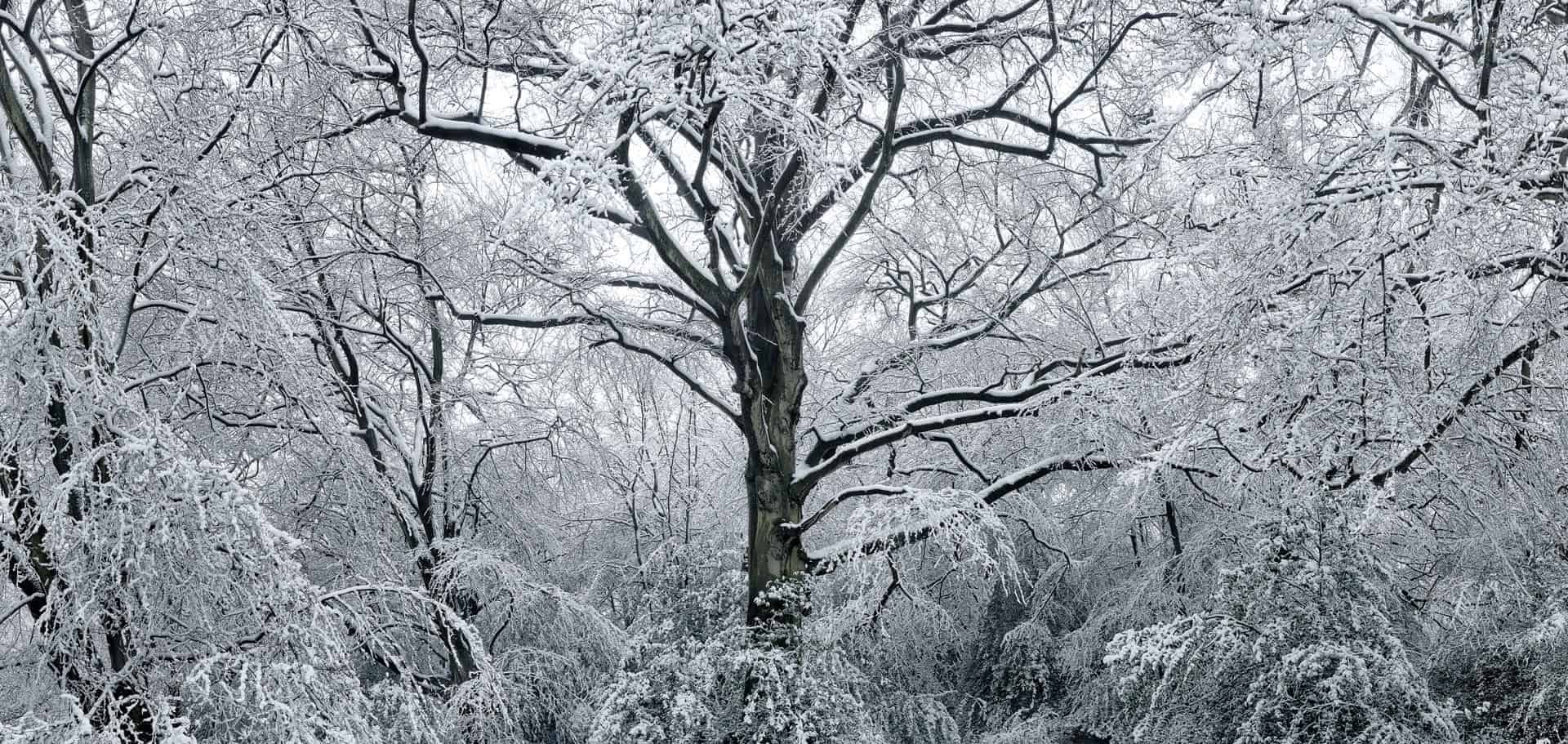 An example of a forest in winter, another example of having a 'moment of inspiration', which is critical for good photographic composition