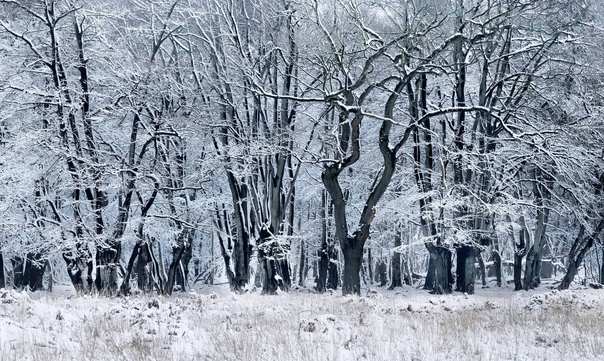 Forest in winter, Epping Forest, Essex, UK