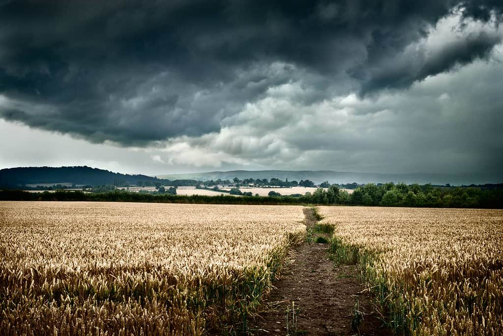 Stormclouds over a wheatfield. Shropshire countryside, England, UK