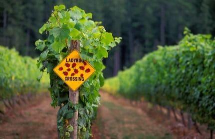 o-que-é-vinho-organico.jpg