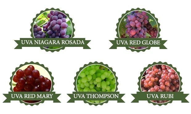 tipos-de-uvas-02.jpg
