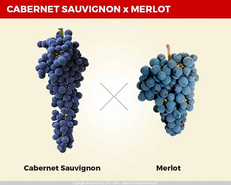 Diferença-Cabernet-Sauvgnon-e-Merlot.jpg