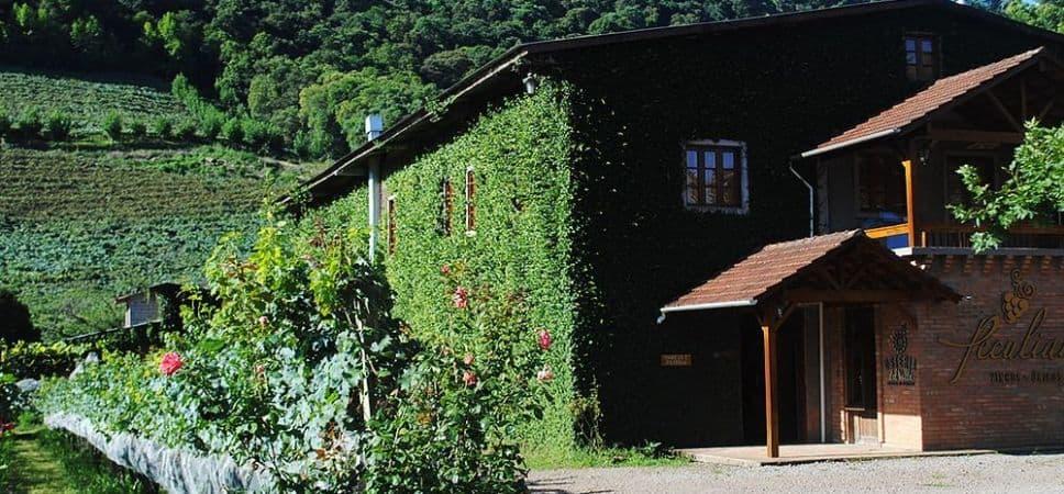 Vinícola-Peculiare-968x450.jpg