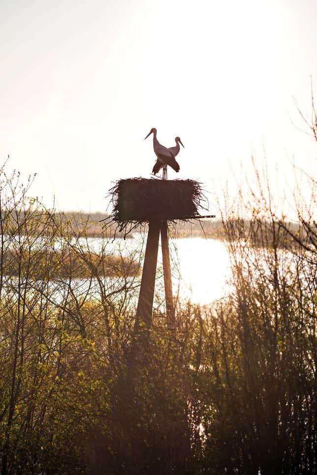 coucher de soleil cigogne parc ornithologique
