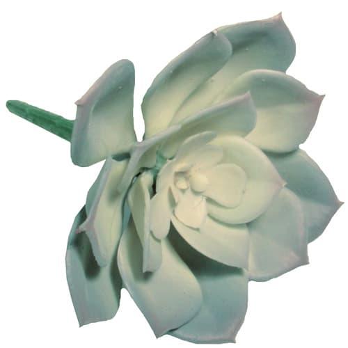 Суккулент 8 х 4,5 см цвет серо-зеленый