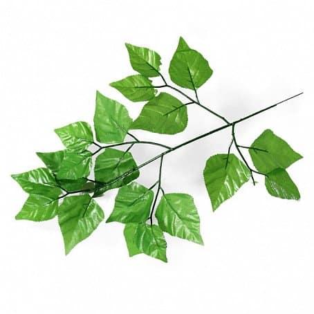 Ветка листья березы
