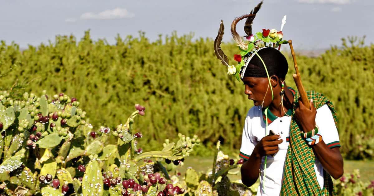Kenya is converting invading plants into biofuel