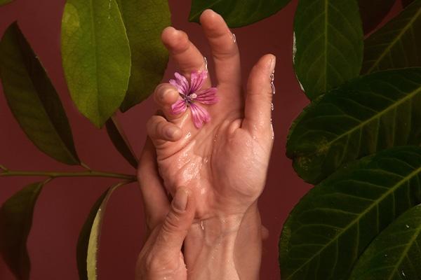 pikkelysömör és kezelése tansy flowers