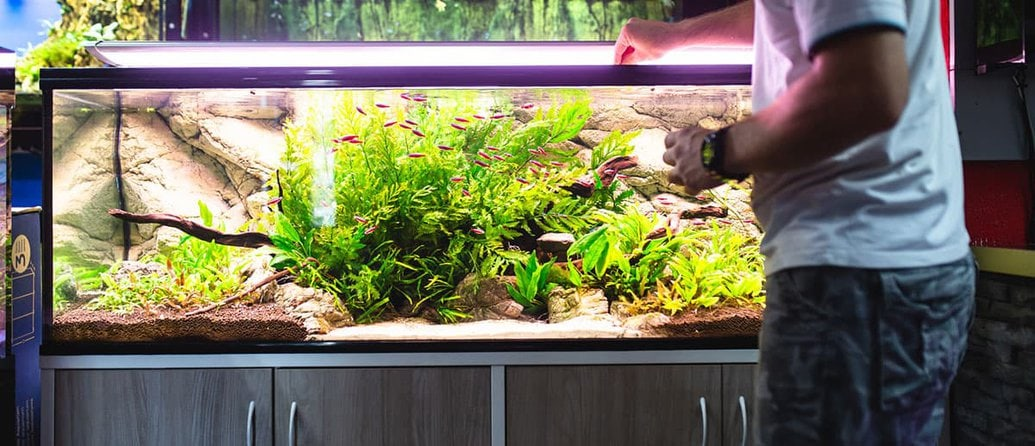 How To Setup Your New Freshwater Aquarium Step By Step