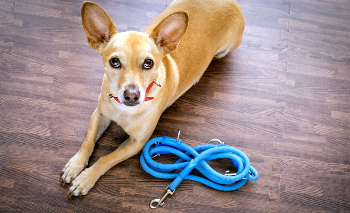 Sewing Ideas for Pets: DIY Dog Leash