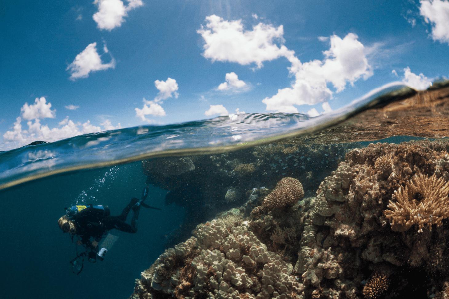 French Polynesia coral reefs Khalid bin sultan