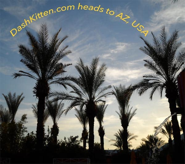 Travelling to BlogPaws palms
