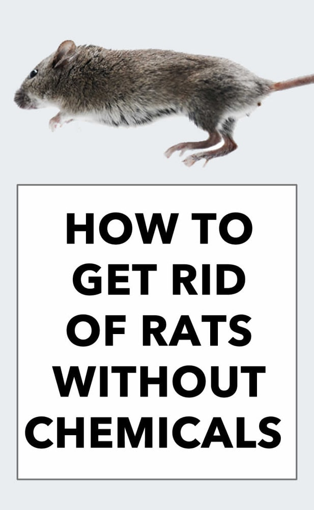 How to Get Rid of Rats Tutorial - Digital Mom Blog