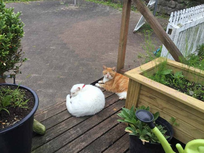 Two companionable cats photographed together. A candid cat photo