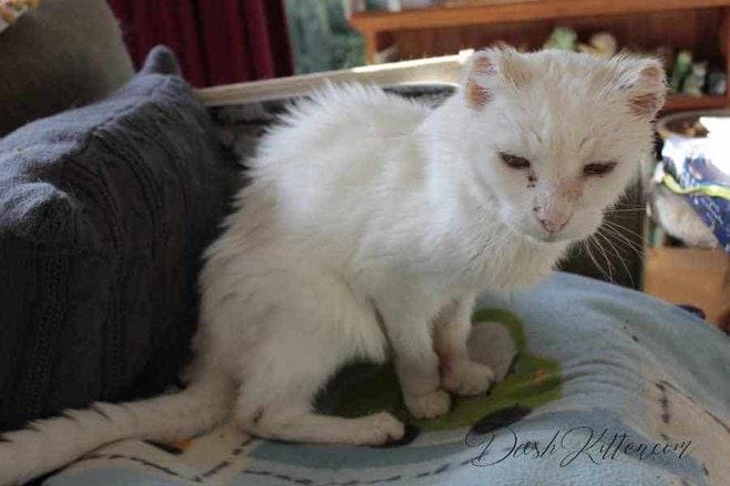 Harvey Senior Cat Full Body Shot
