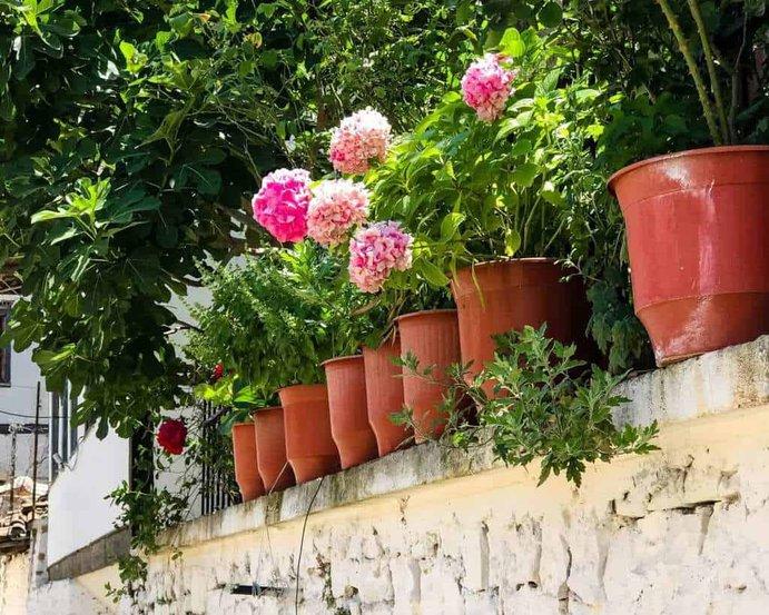 Albania - Berat - Berat Flowers