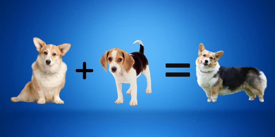 20 Awesome Beagle Mix: Complete Guide to Beagle Cross Breeds