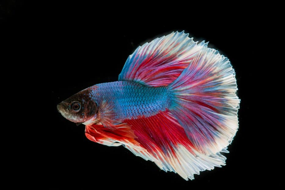 The Best 3 Gallon Fish Tanks Small Fish Tanks For Easy Care