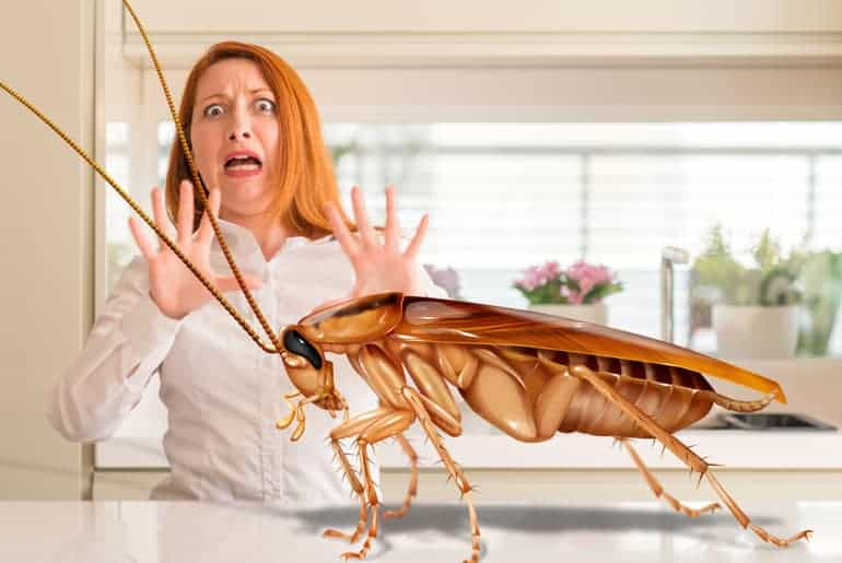 How To Hire A Roach Exterminator Cockroach Facts