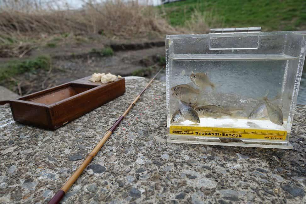 Details about  /Kishu herazao Kishu bamboo fishing rod  to catch carps Edo Wazao vintage craft