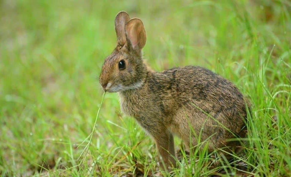 8 Best Rabbit-Based Dog Foods: Top Rabbit Eats For Your Pooch!