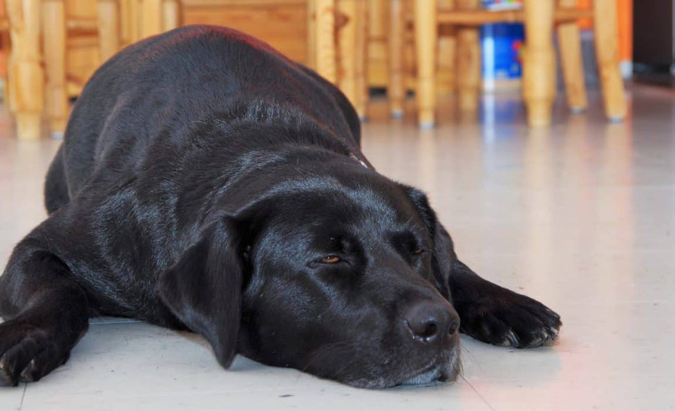 5 Best Cooling Dog Beds For Canines 2020 Let Your Pooch