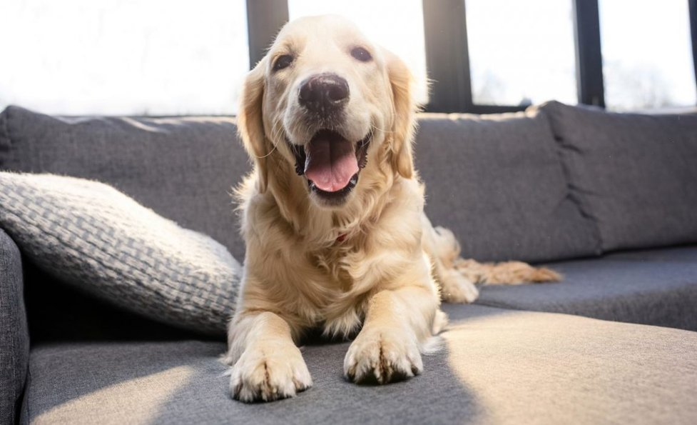 Dog-Proof Furniture: How to Pick Furniture Your Pets Won\'t ...