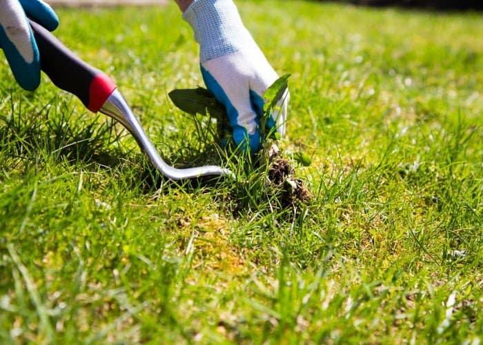 Remove Weeds From Garden